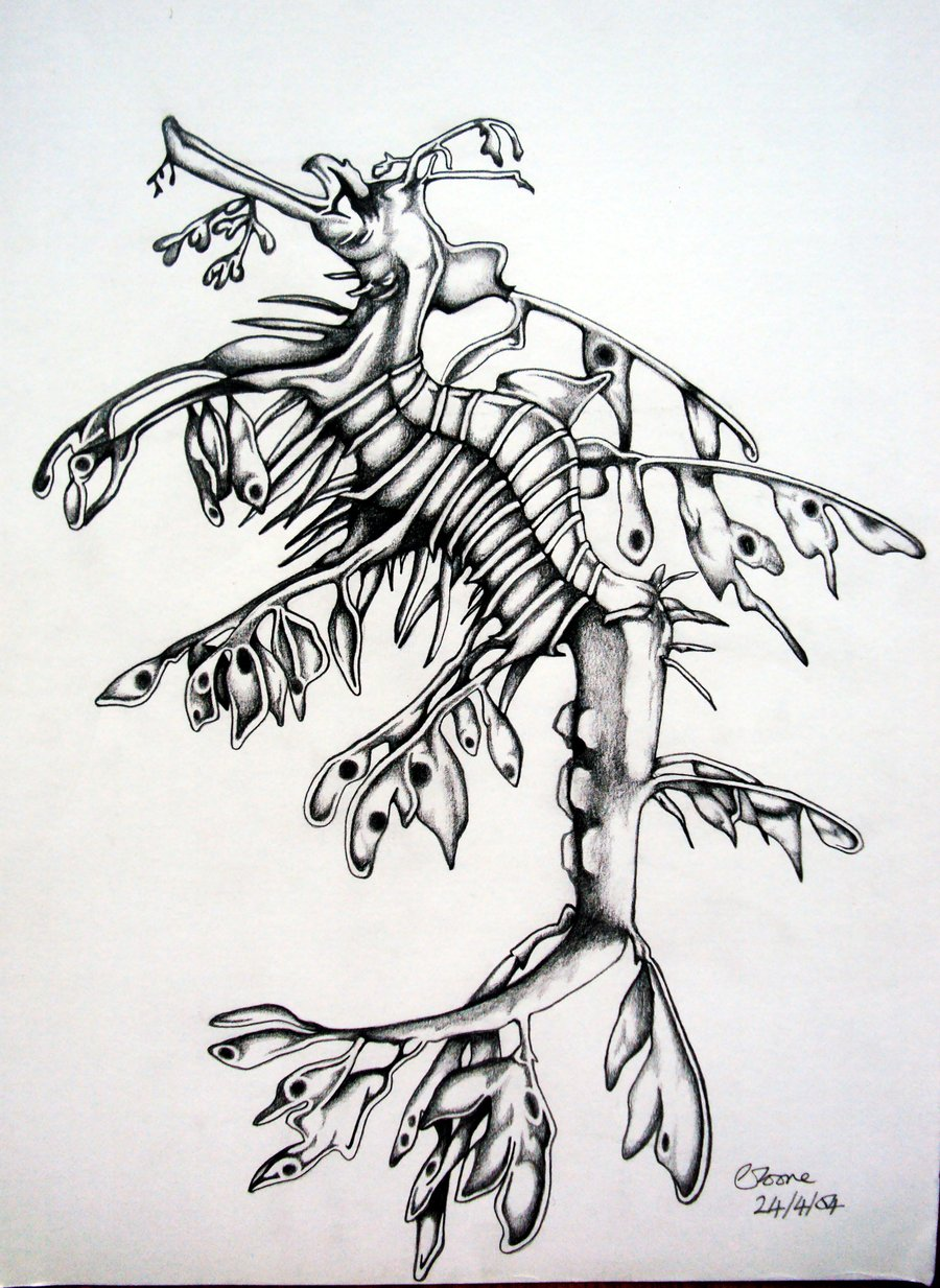 Leafy Seadragon coloring #19, Download drawings