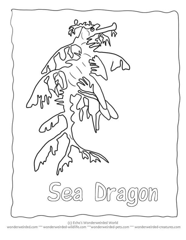 sea dragon coloring pages - leafy seadragon coloring download leafy seadragon coloring