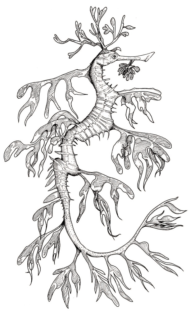 ocean dragon coloring pages - photo#6
