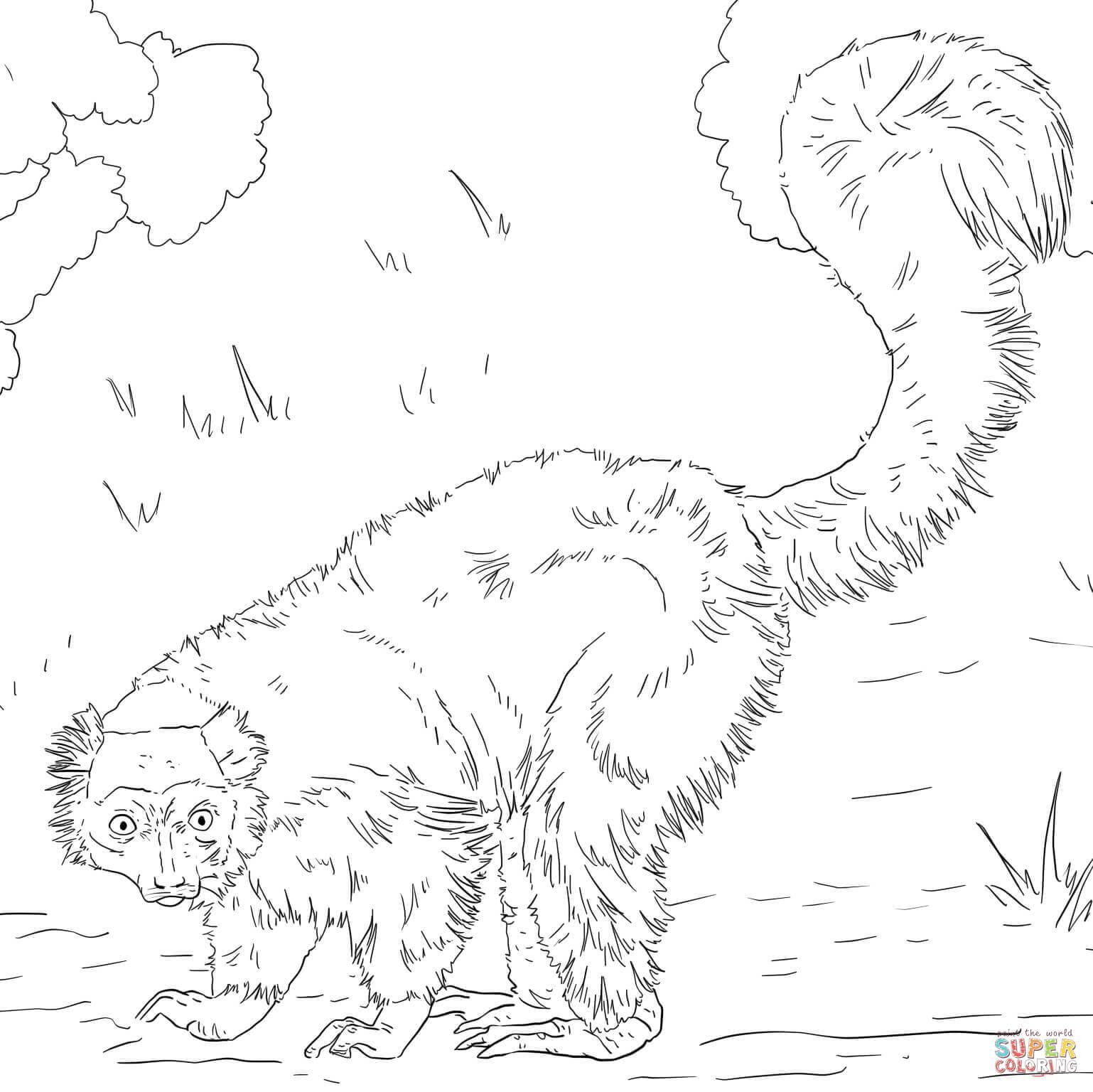 Lemur coloring #6, Download drawings