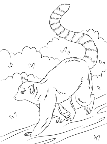 Ring-tailed Lemur coloring #4, Download drawings
