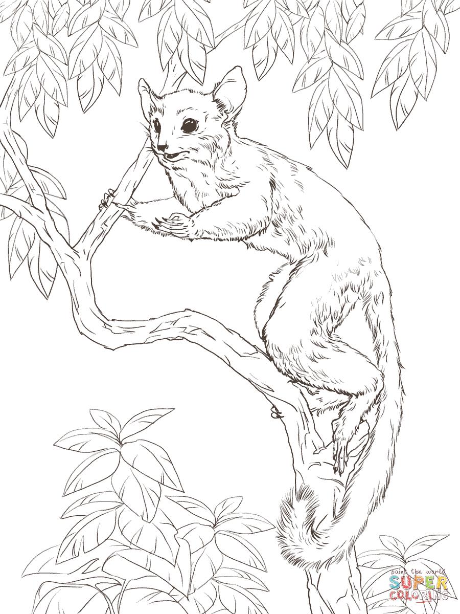 Lemur coloring #7, Download drawings