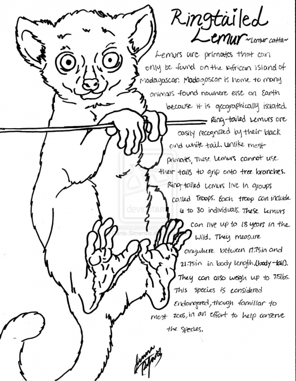 Ring-tailed Lemur coloring #3, Download drawings