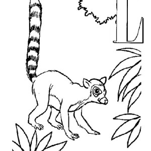 Ring-tailed Lemur coloring #11, Download drawings