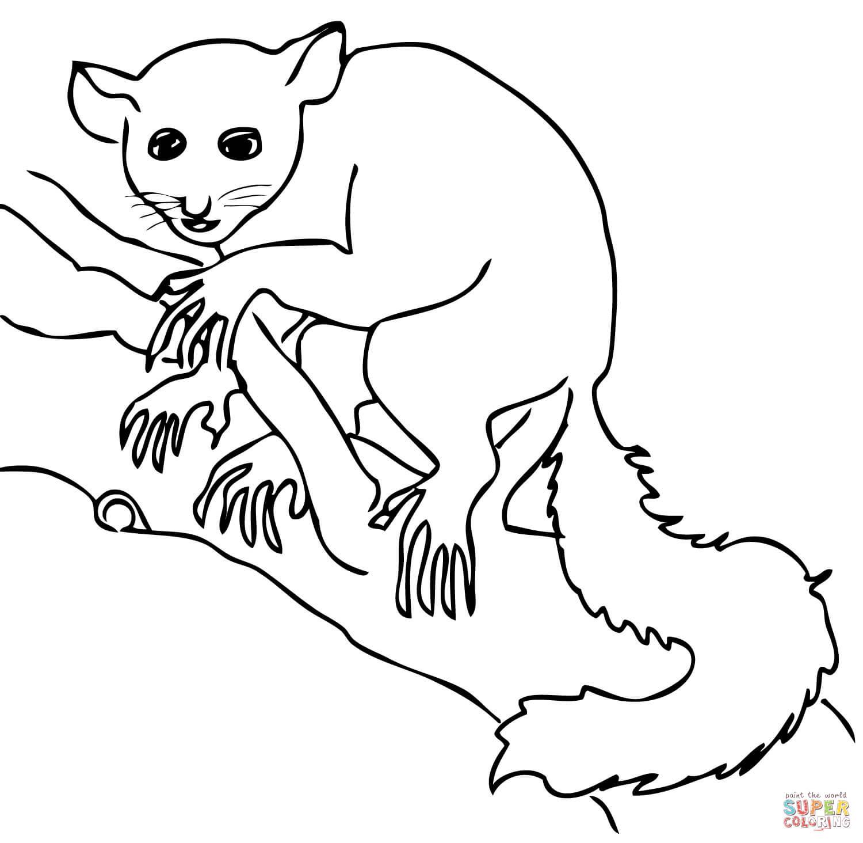 Lemur coloring #14, Download drawings