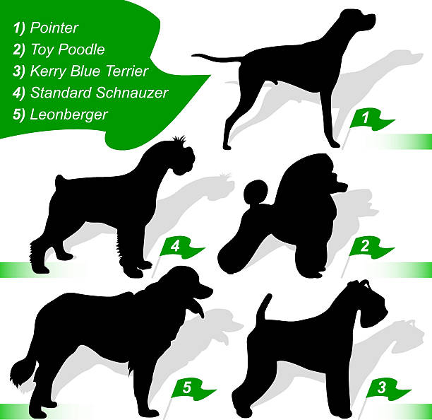 Leonberger clipart #12, Download drawings