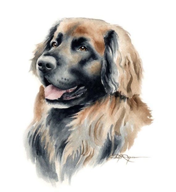 Leonberger clipart #10, Download drawings