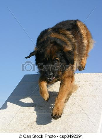 Leonberger clipart #4, Download drawings