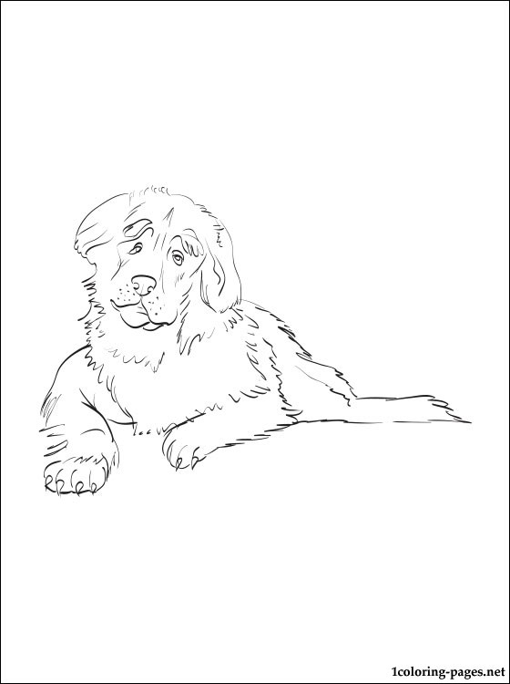 Leonberger coloring #7, Download drawings