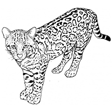Leopard coloring #7, Download drawings
