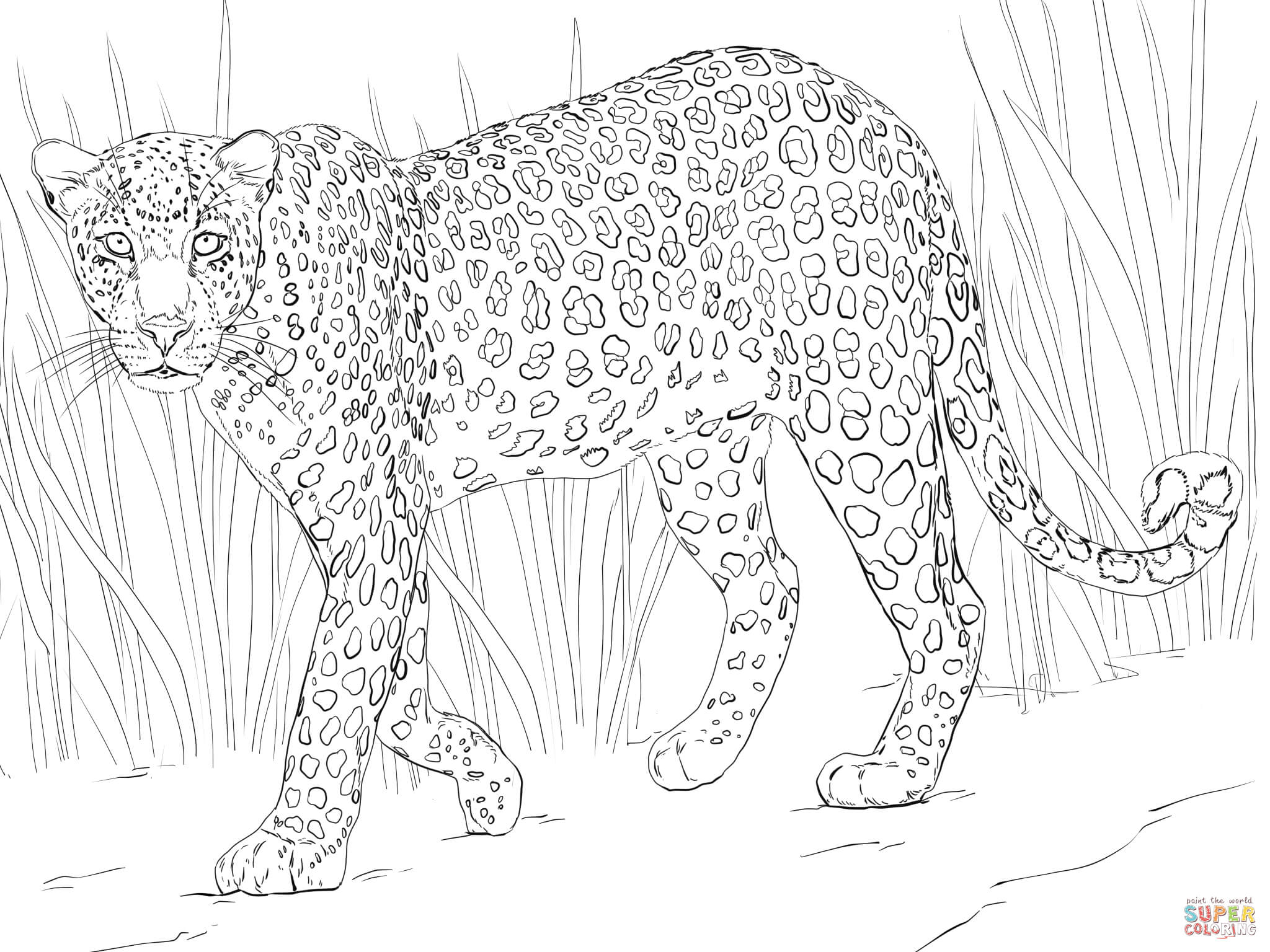 Leopard coloring #6, Download drawings