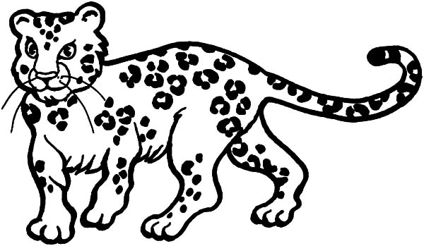 Leopard coloring #4, Download drawings