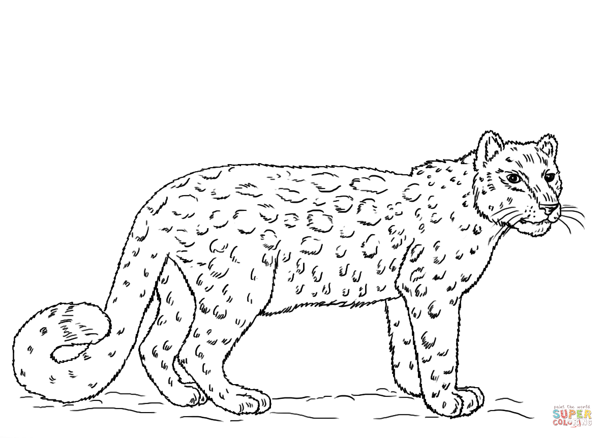 Leopard coloring #11, Download drawings