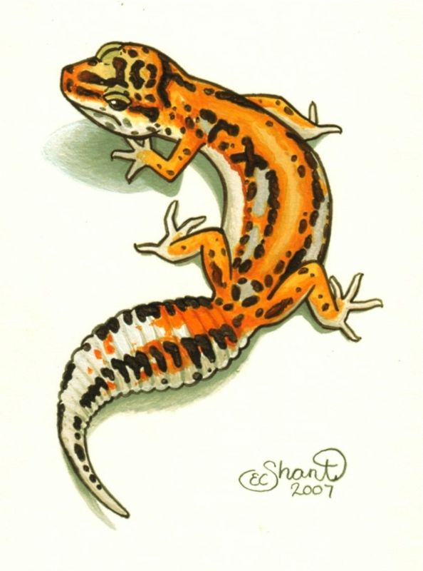 Leopard Gecko clipart #2, Download drawings