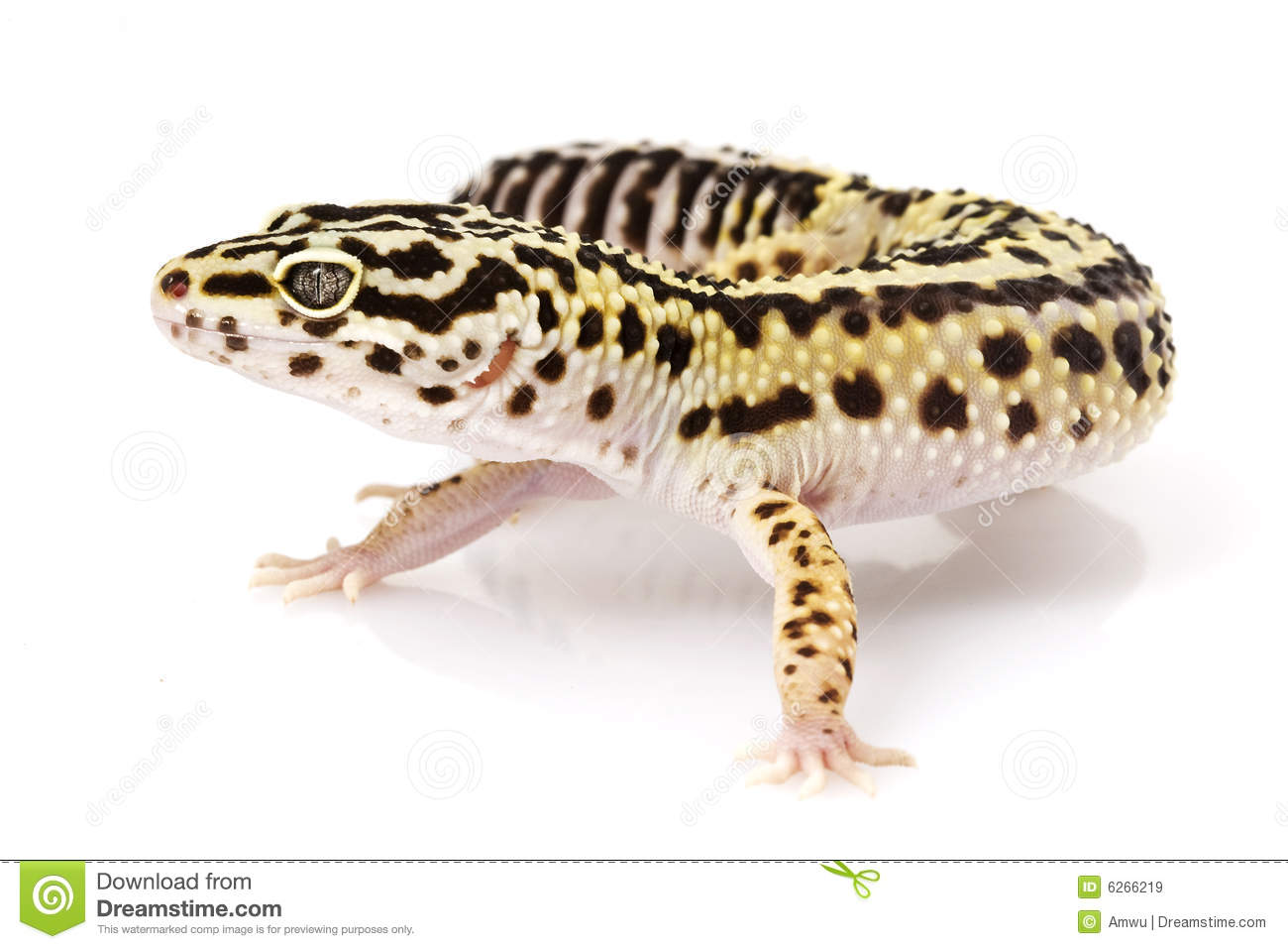 Leopard Gecko clipart #11, Download drawings
