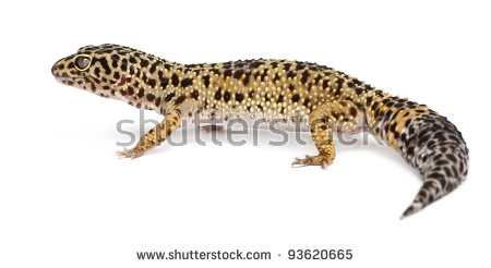 Leopard Gecko clipart #8, Download drawings
