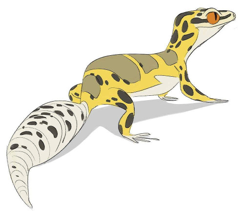 Leopard Gecko clipart #6, Download drawings