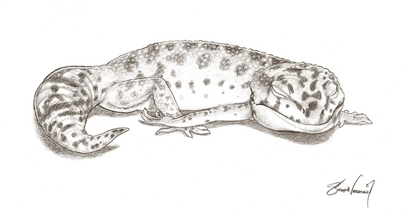 Leopard Lizard coloring #7, Download drawings