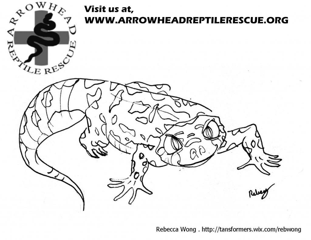 Leopard Gecko coloring #8, Download drawings
