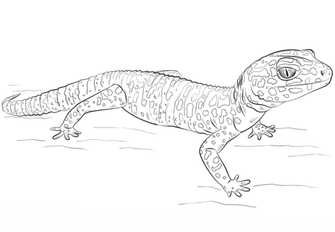Leopard Gecko coloring #6, Download drawings