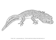 Leopard Gecko coloring #15, Download drawings