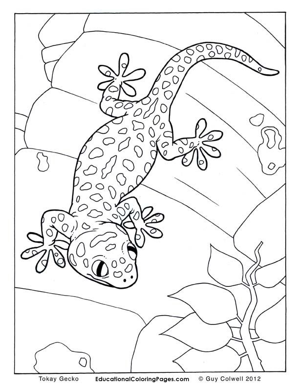 Leopard Lizard coloring #9, Download drawings