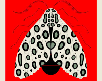 Leopard Moth clipart #8, Download drawings