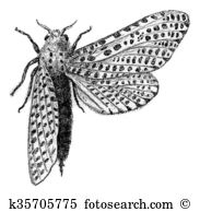 Leopard Moth clipart #20, Download drawings