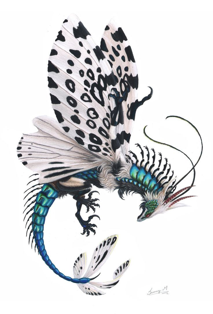 Leopard Moth coloring #7, Download drawings