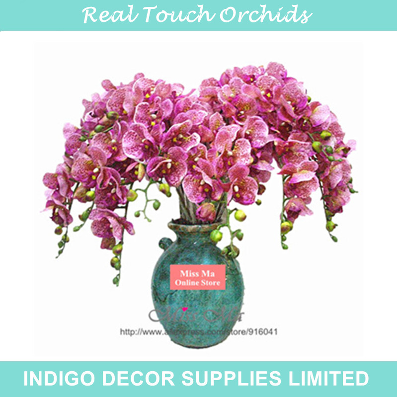 Leopard Orchid clipart #7, Download drawings