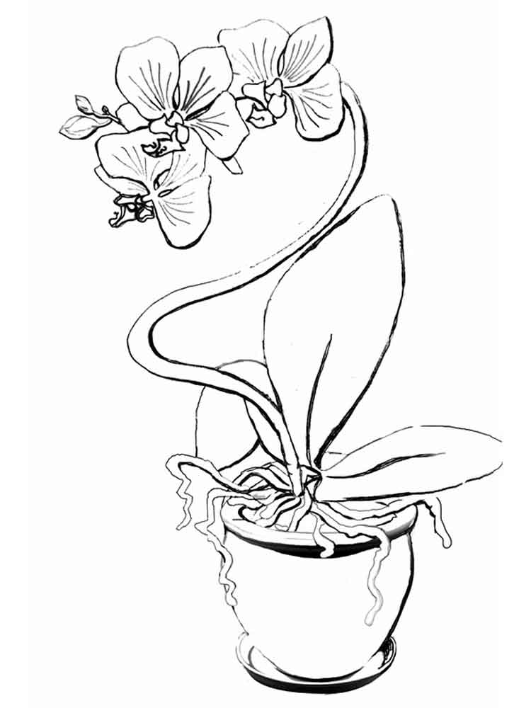 Leopard Orchid coloring #12, Download drawings