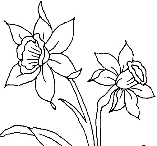 Leopard Orchid coloring #18, Download drawings