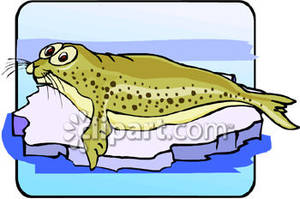 Leopard Seal clipart #10, Download drawings