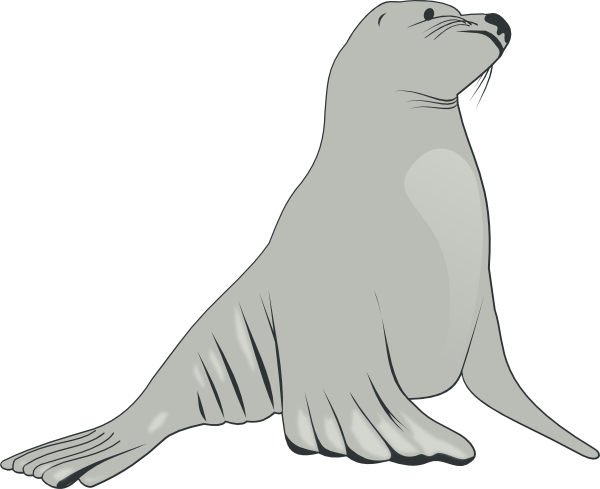 Leopard Seal clipart #9, Download drawings