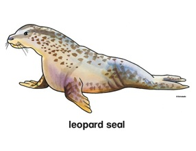 Leopard Seal clipart #16, Download drawings