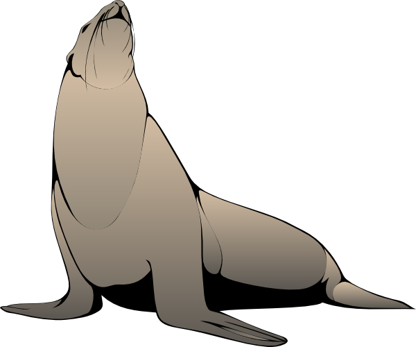 Leopard Seal clipart #4, Download drawings