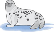 Leopard Seal clipart #18, Download drawings