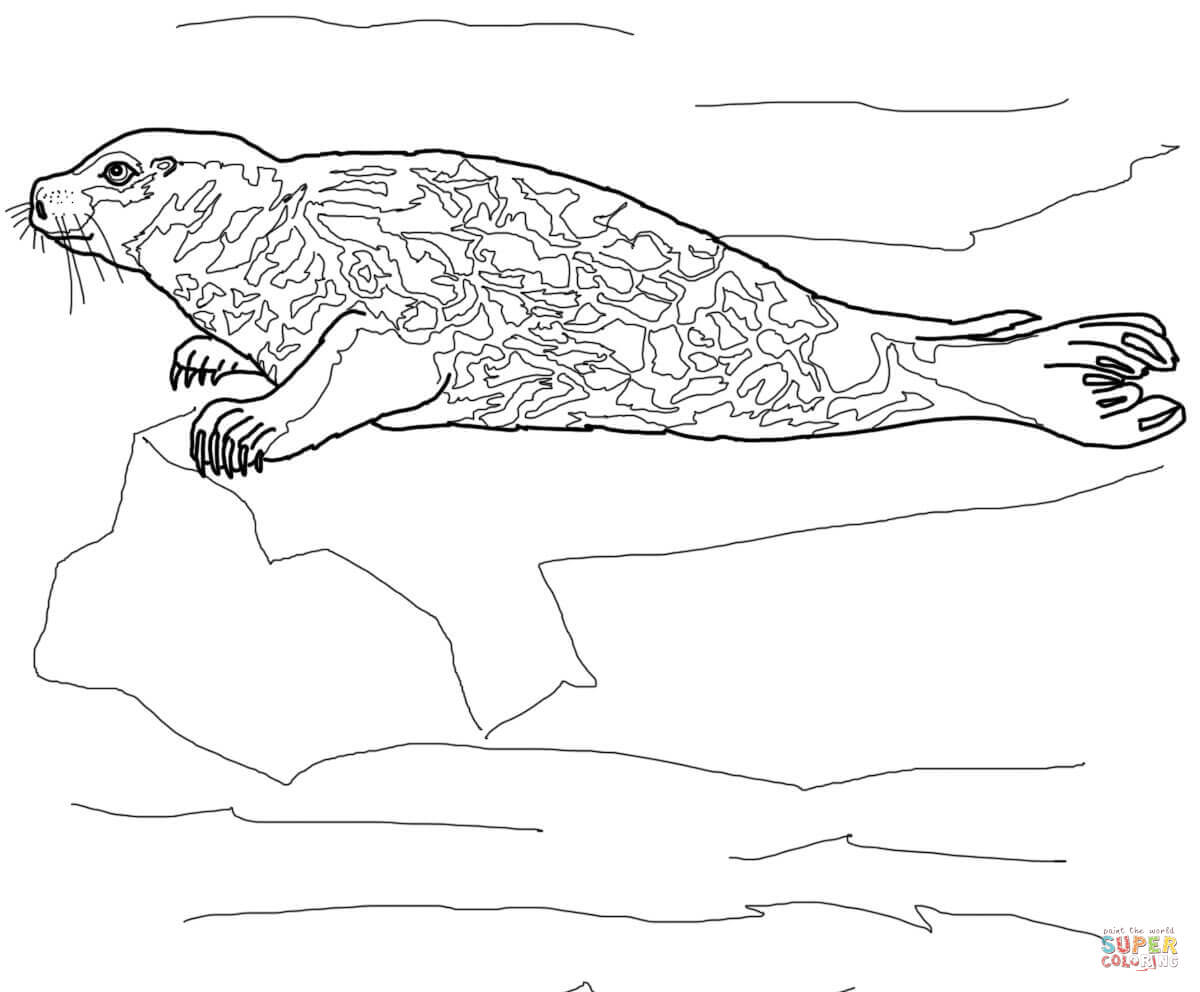 Leopard Seal coloring #11, Download drawings