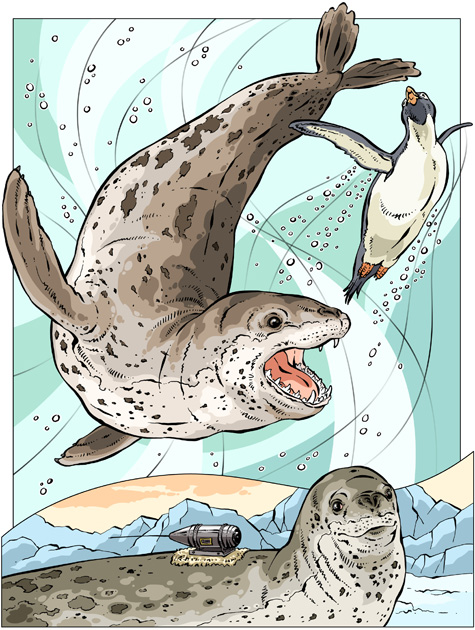 Leopard Seal coloring #8, Download drawings