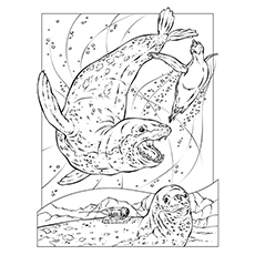 Leopard Seal coloring #9, Download drawings