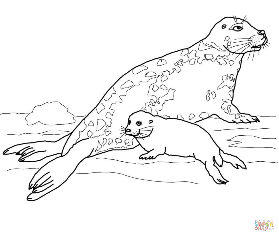 Leopard Seal coloring #3, Download drawings