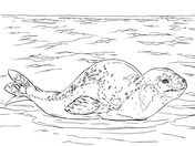 Leopard Seal coloring #1, Download drawings