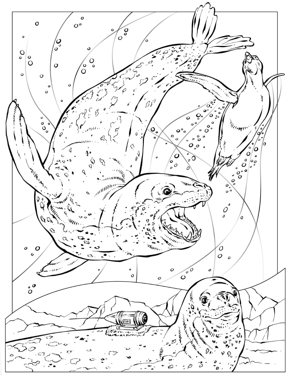 Leopard Seal coloring #18, Download drawings