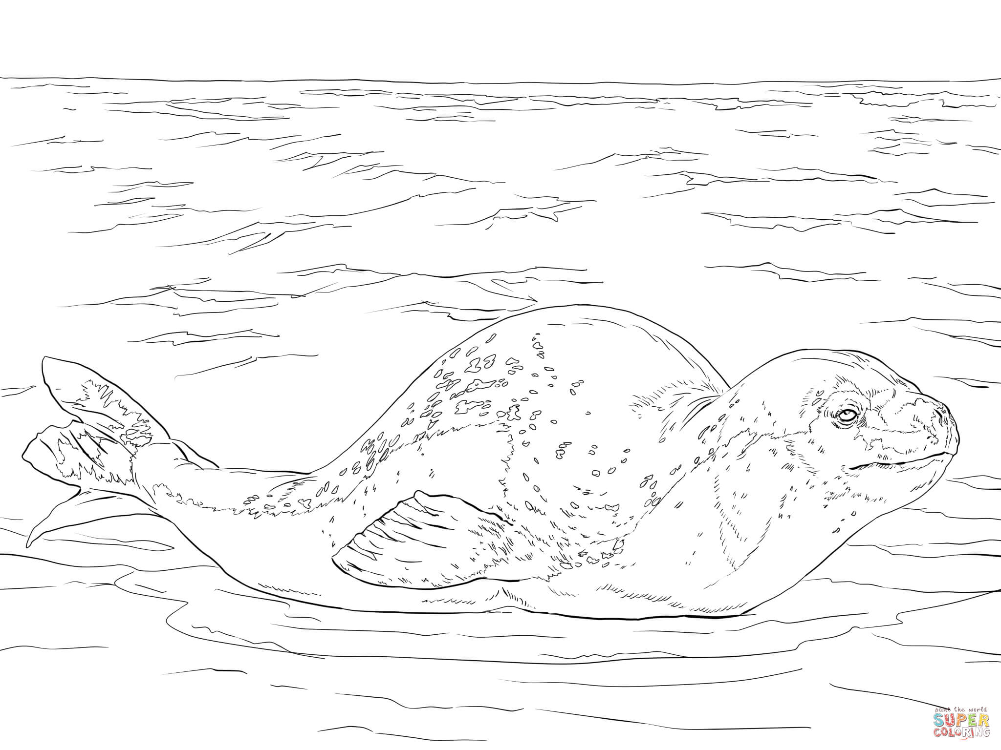 Leopard Seal coloring #10, Download drawings