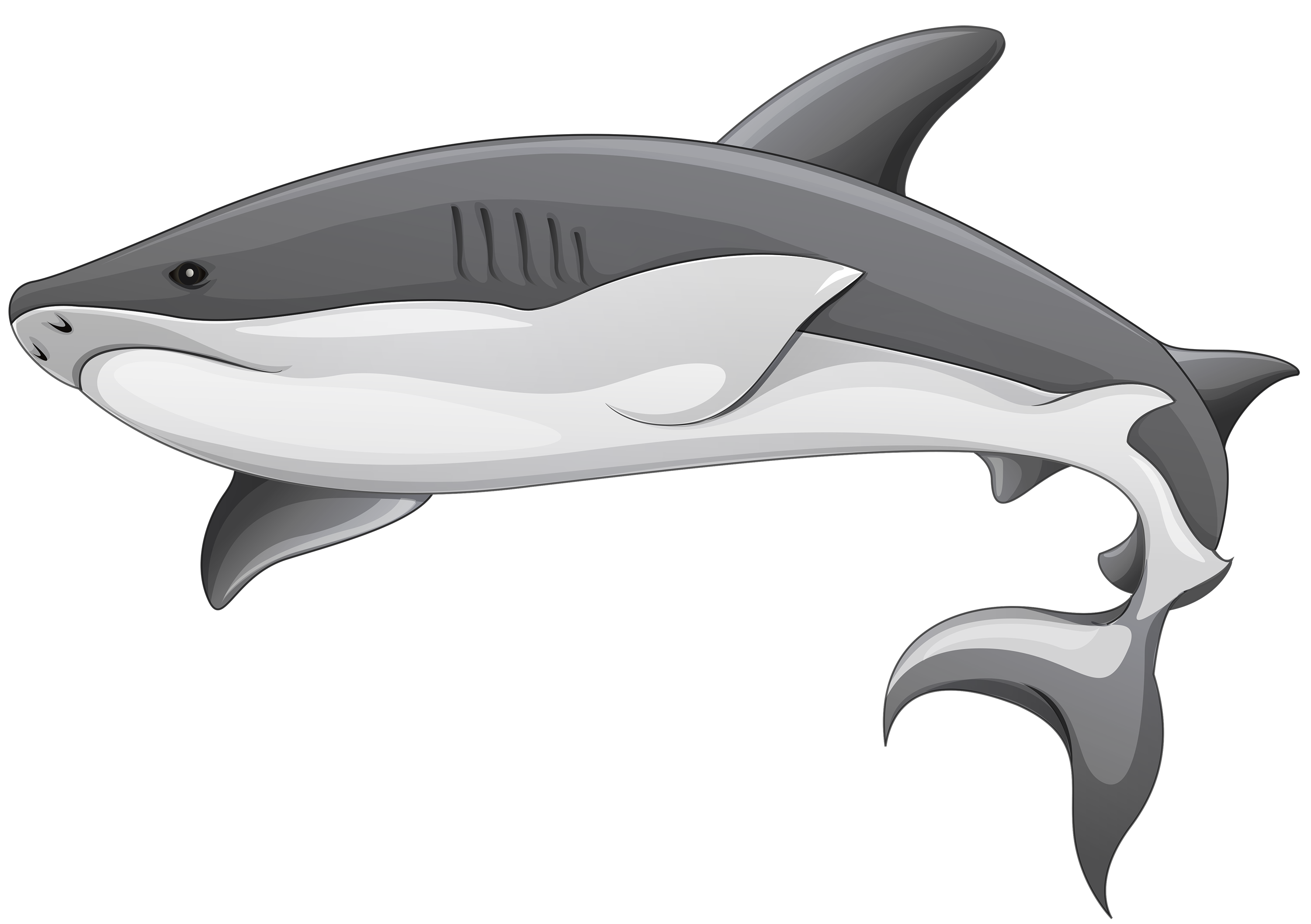 Leopard Shark clipart #2, Download drawings
