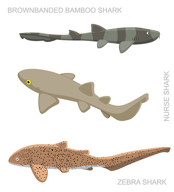Leopard Shark clipart #13, Download drawings