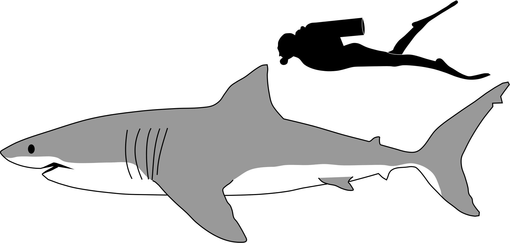 Great White Shark svg #19, Download drawings