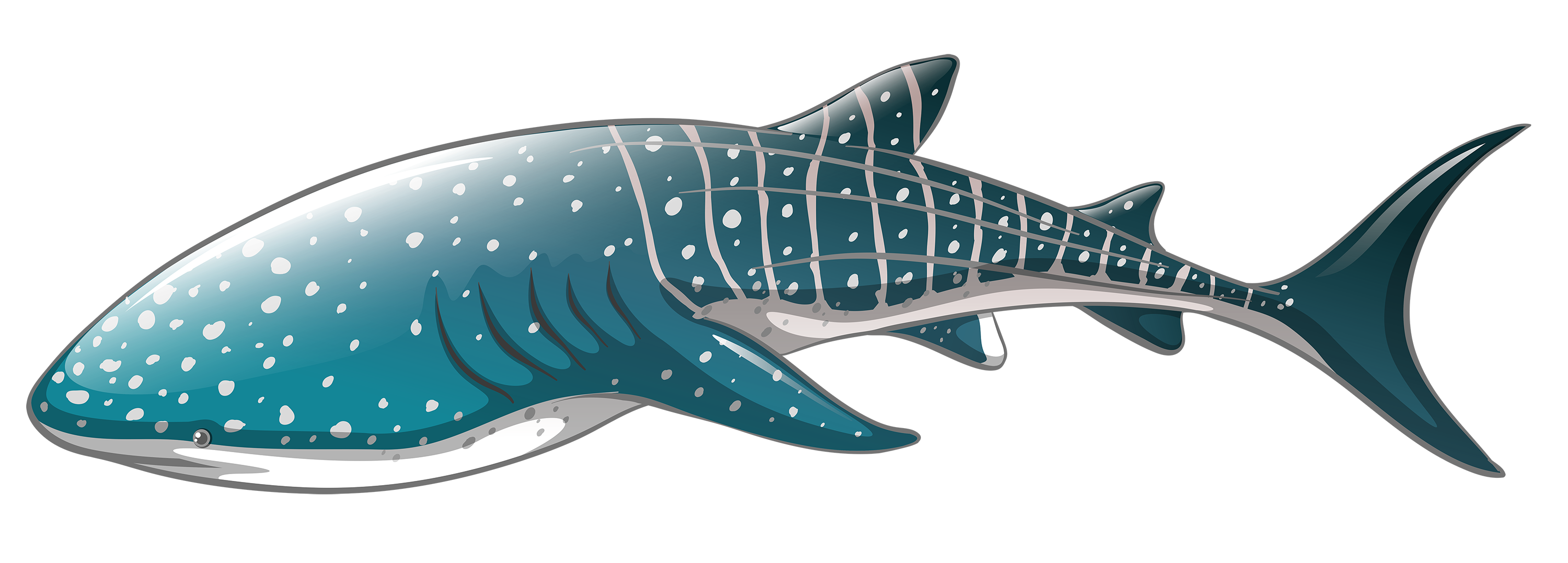Leopard Shark clipart #1, Download drawings