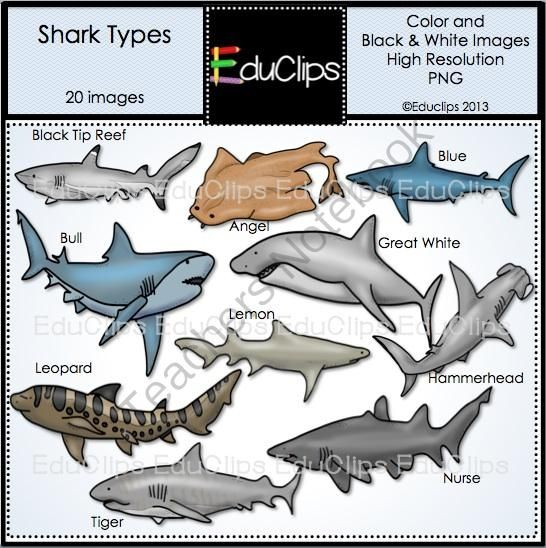 Leopard Shark clipart #11, Download drawings
