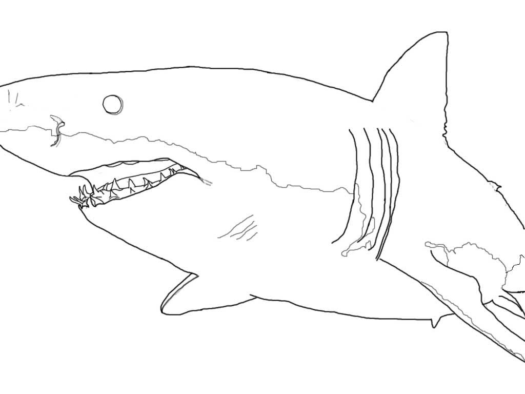 Leopard Shark coloring #20, Download drawings